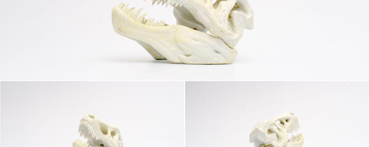 Czaszka dinozaura 3D